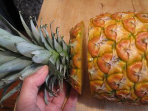 Start-flat-topped-pineapple-had-its-leaves-cut-off