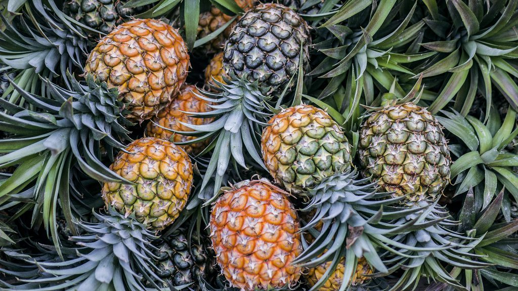 Group of Pineapple Crowns