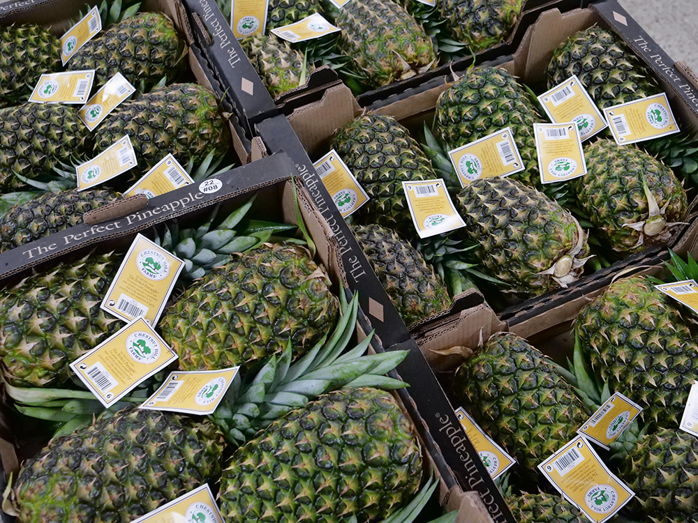 pineapple food bank donations give back