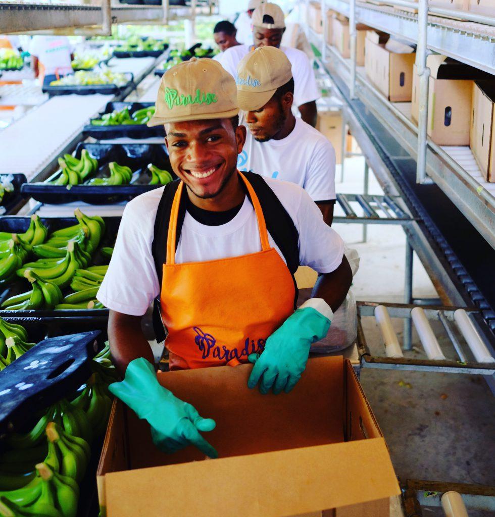 fresh fruit fair-trade bananas