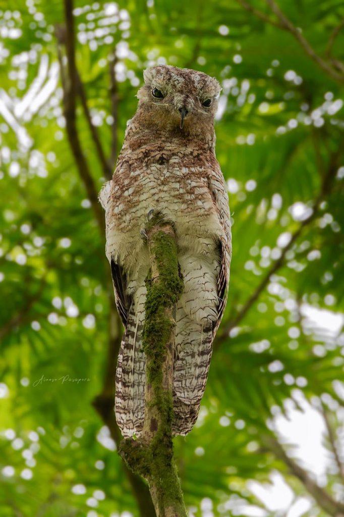 costa rica wildlife birds
