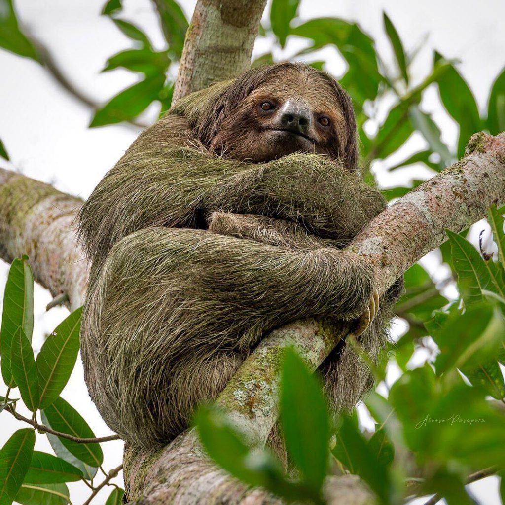 costa rica wildlife sloths